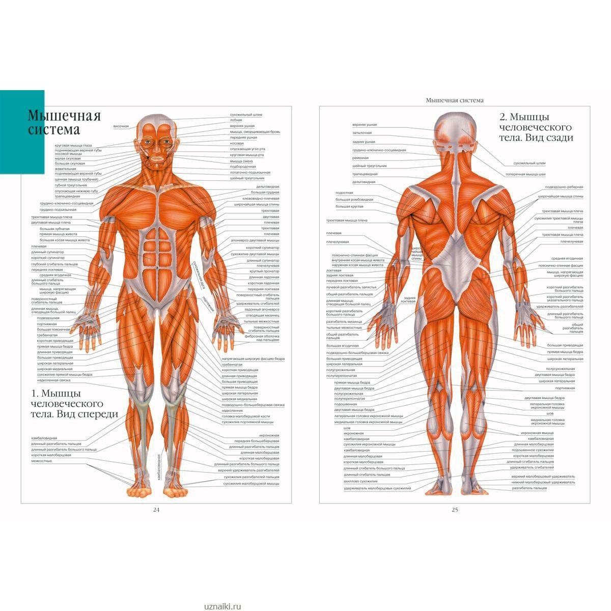 Уроки анатомии собственного тела в hd 5 фотография