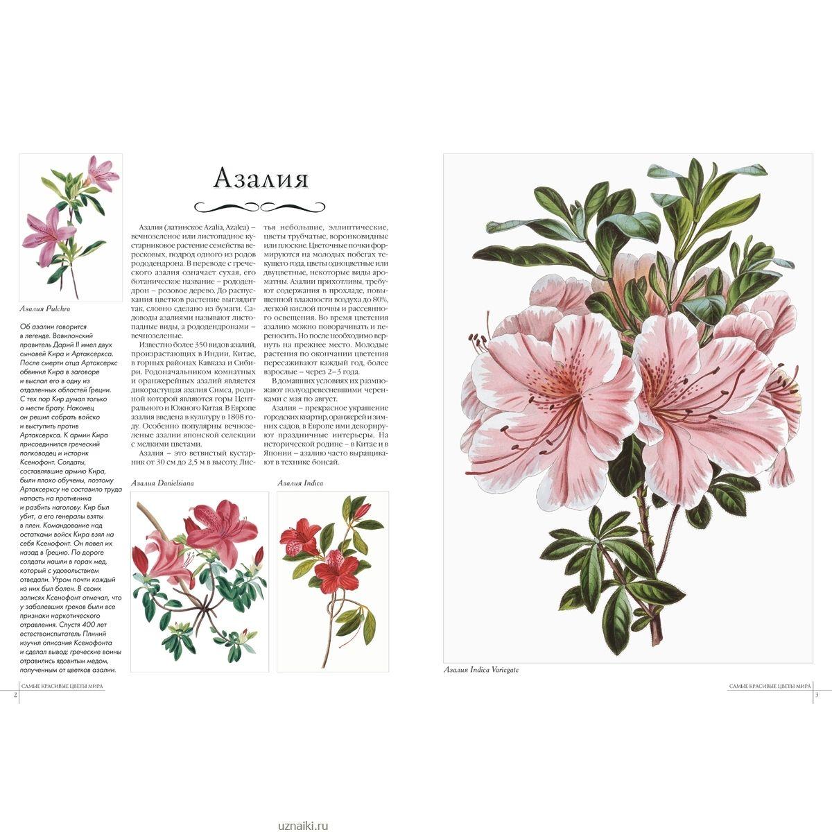 Красивые цветы описание с